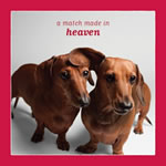 A Match Made In Heaven Dachshund Valentine Day Card